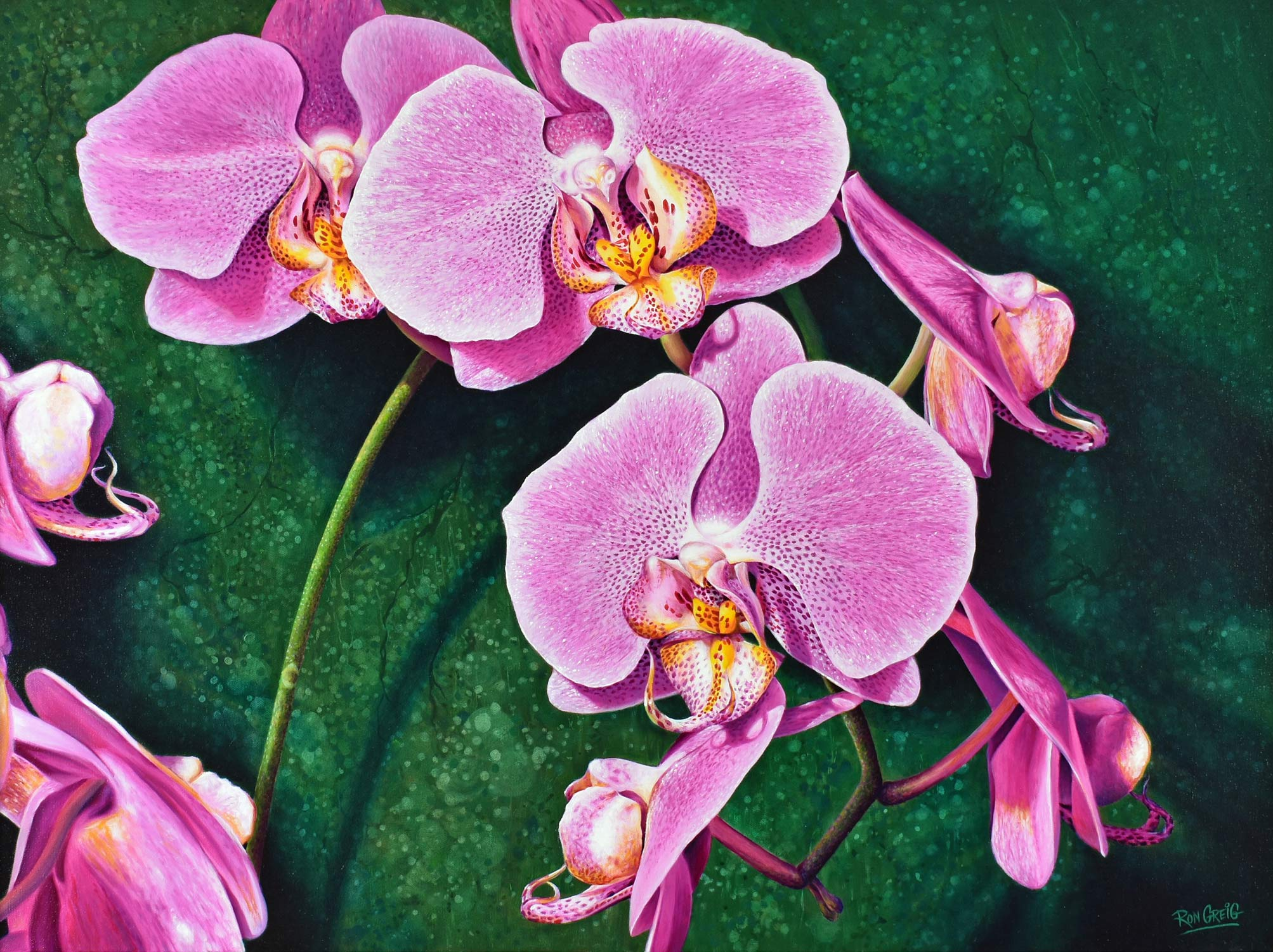 orchid painting, RBG orchid show, realism, flower painting, realistic oil painting